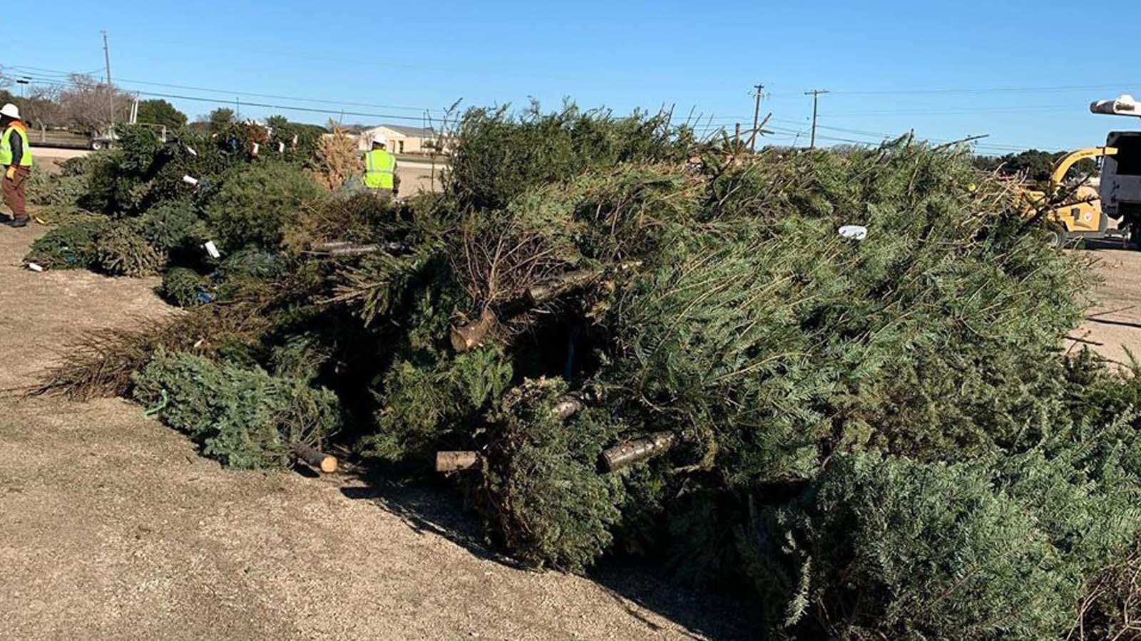 Affiliate Events Keep Christmas Trees out of Landfills
