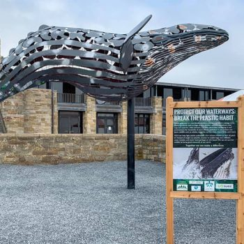 The Story of Jonsey the Humpback Whale
