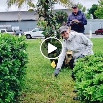 Planting Trees in Nassau County
