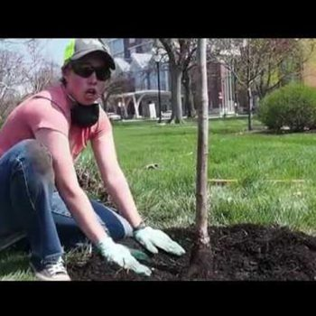 Virtual Tree Planting with Keep Indianapolis Beautiful