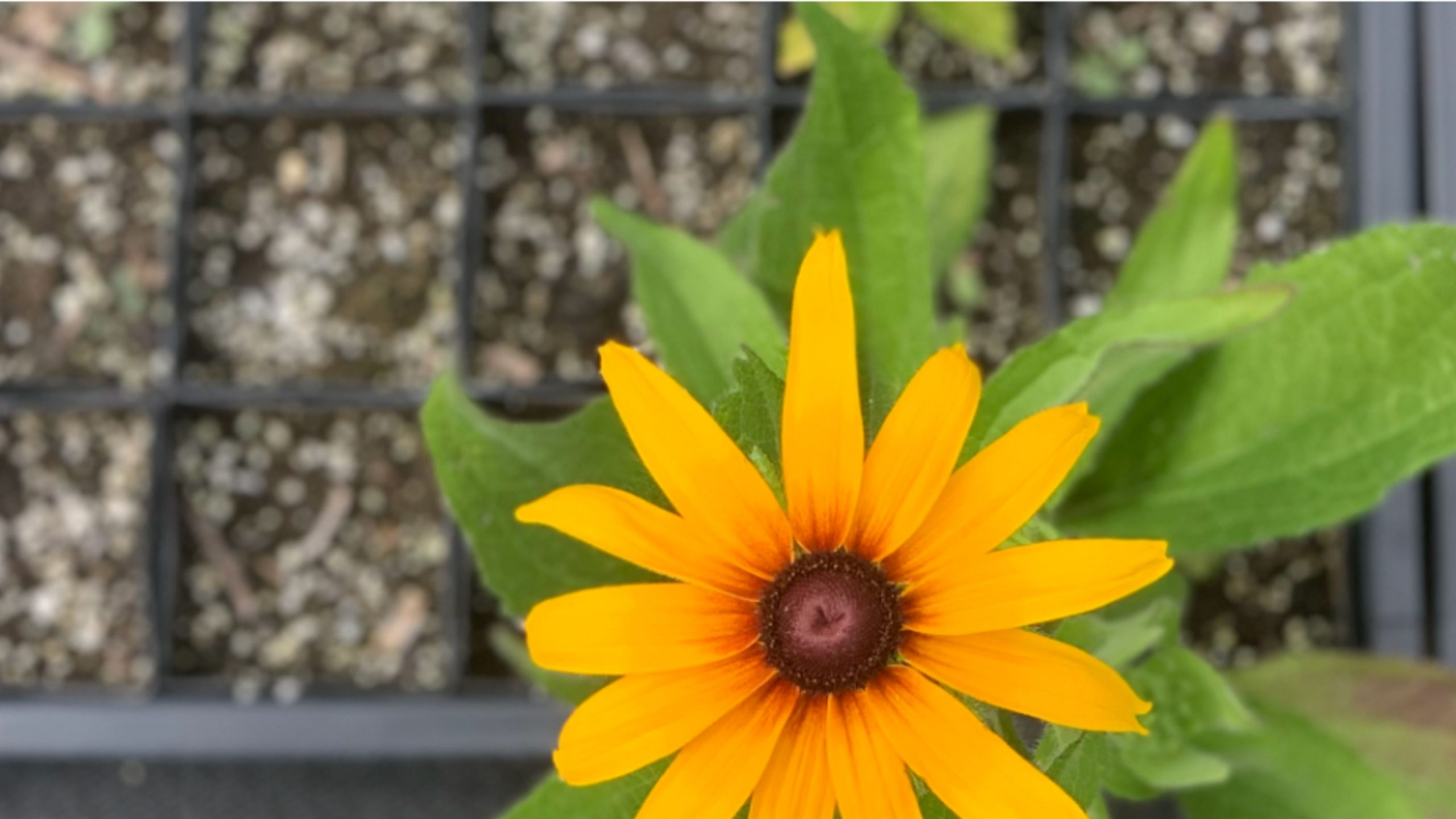 Keep Indianapolis Beautiful Launches Native Plant Nursery
